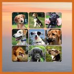Dog Rescue Greece - Honden ter Adoptie