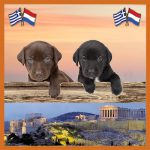 Dog Rescue Greece 03 Vakantiehond