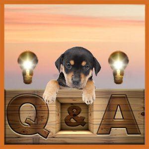 Dog Rescue Greece - FAQ - Veelgestelde vragen en de antwoorden