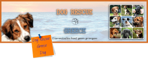 Dog Rescue Greece dag archief