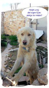 Gastgezin bij Dog Rescue Greece