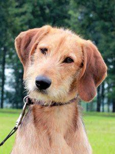 Huisbezoeker bij Dog Rescue Greece