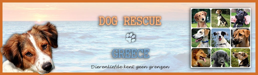 Over Dog Rescue Greece 01 Banner