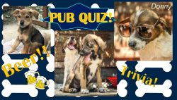 Pubquiz voor Dog Rescue Greece