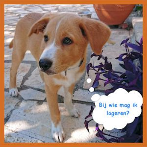 Dog Rescue Greece - Gastgezin