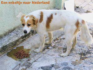 Enkeltje naar Nederland van Renee van Dongen