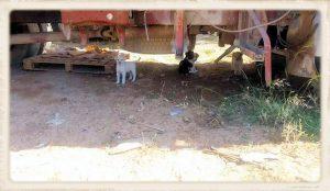 Nieuws - Aspropyrgos en Loutraki - autowrak