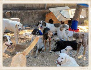 Griekenland shelter overvol 02