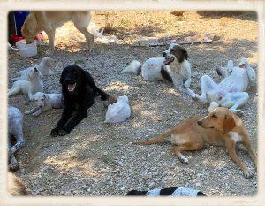 Griekenland shelter overvol 03