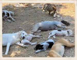 Griekenland shelter overvol 04