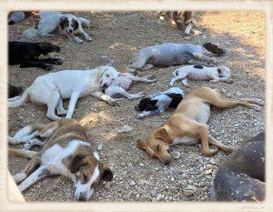 Griekenland shelter overvol 05