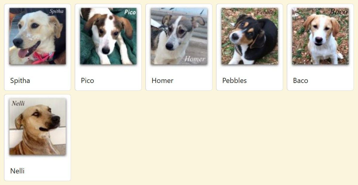 Geadopteerde honden 2018 03 Dog Rescue Greece