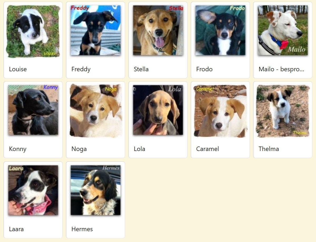 Geadopteerde honden 2018 04 Dog Rescue Greece