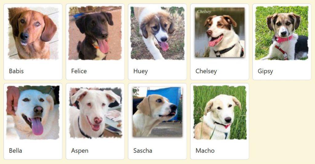 Geadopteerde honden 2018 06 Dog Rescue Greece