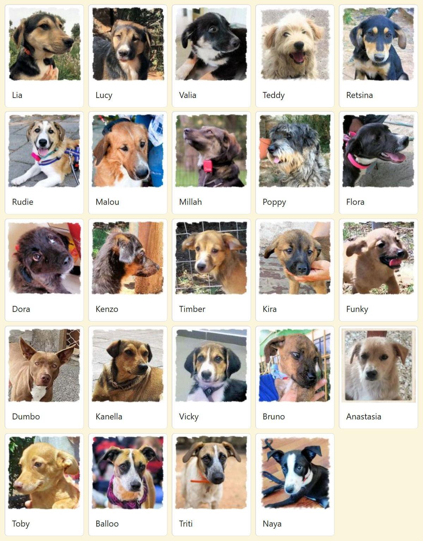 Geadopteerde honden 2018 07 Dog Rescue Greece
