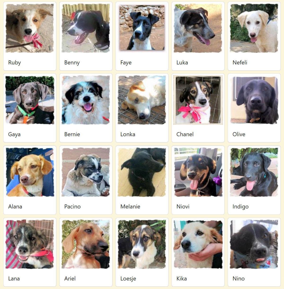 Geadopteerde honden 2018 08 Dog Rescue Greece