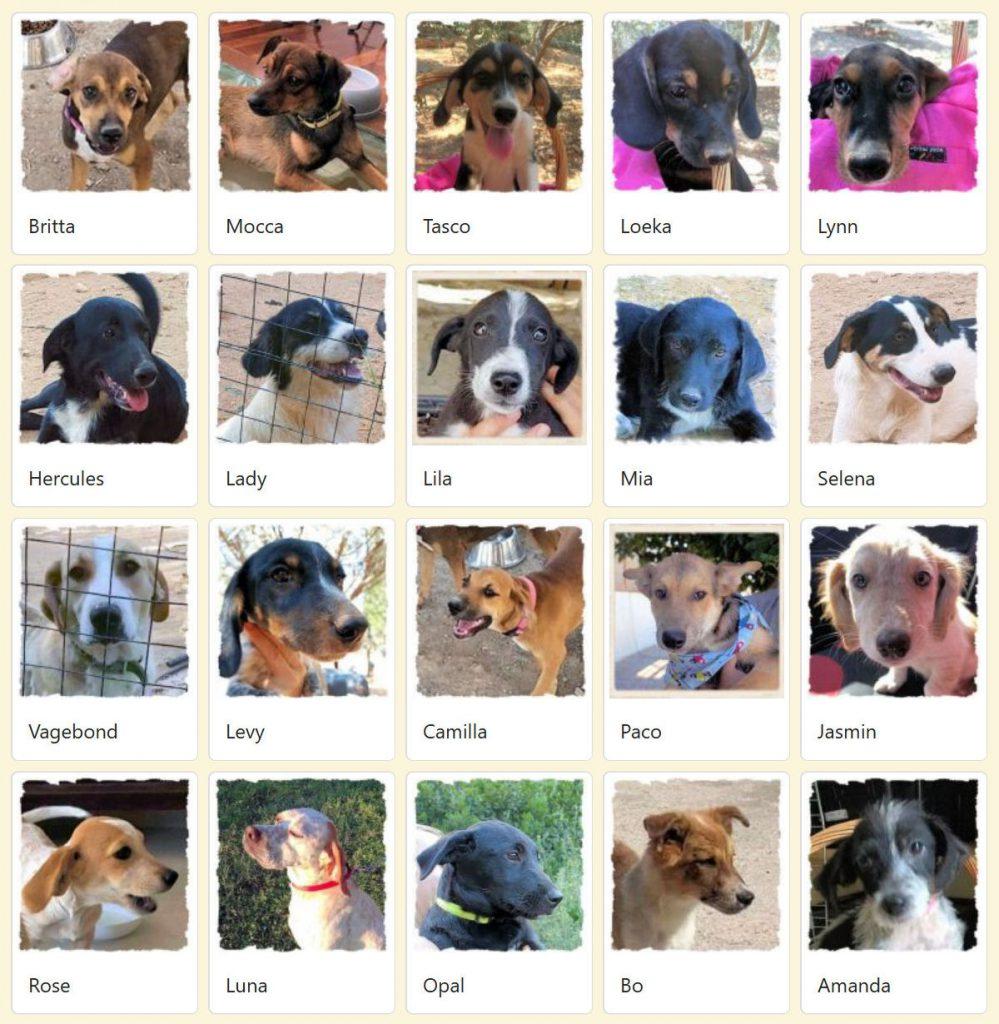 Geadopteerde honden 2018 10 Dog Rescue Greece