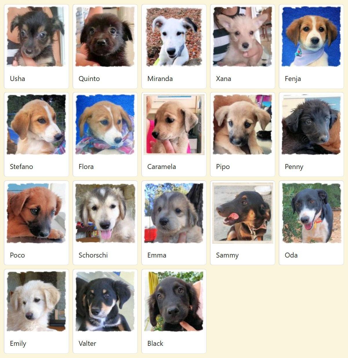 Geadopteerde honden 2018 12 Dog Rescue Greece