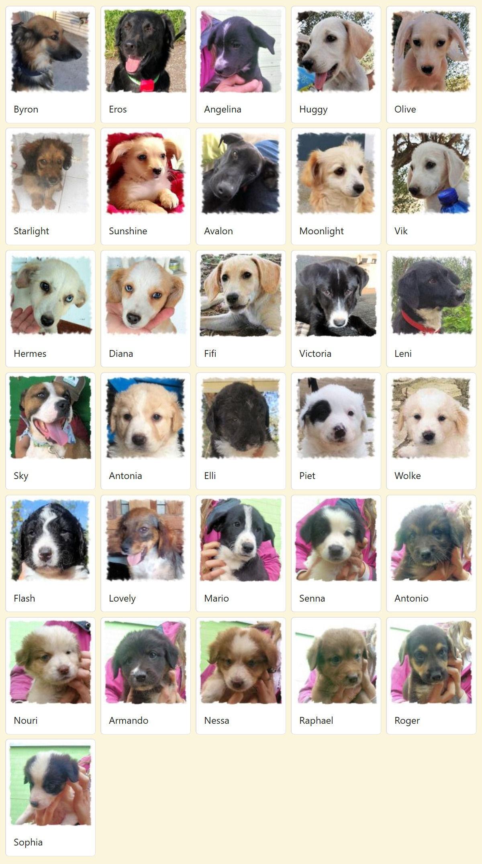 Geadopteerde honden 2019 01 Dog Rescue Greece