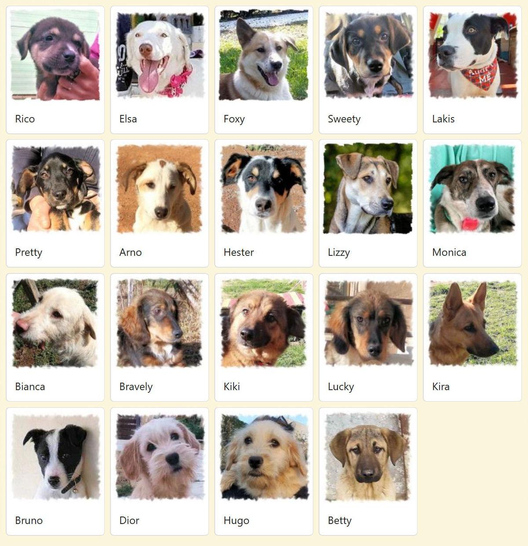 Geadopteerde honden 2019 02 Dog Rescue Greece