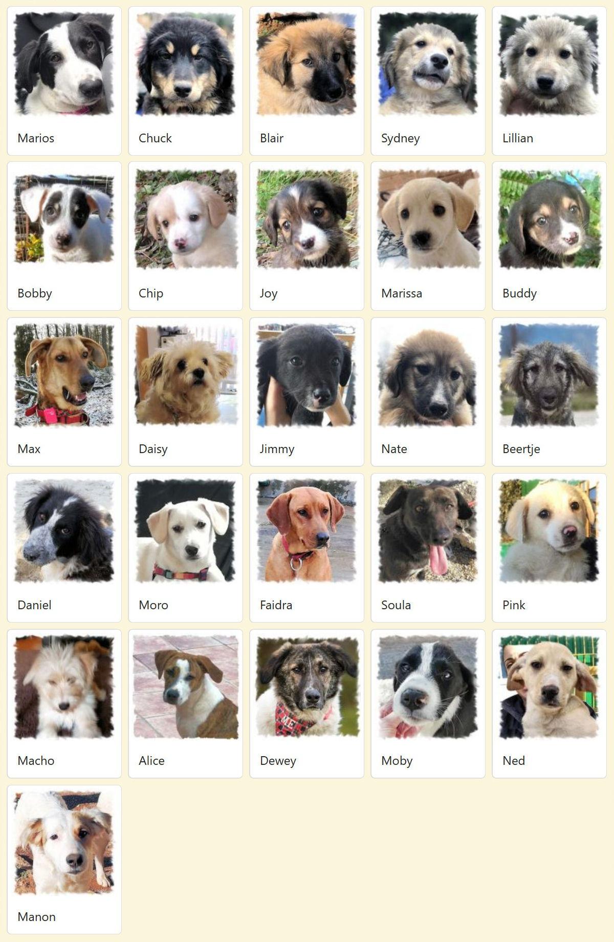 Geadopteerde honden 2019 03 Dog Rescue Greece