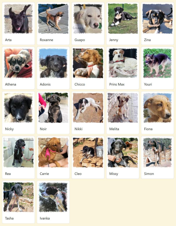 Geadopteerde honden 2019 05 Dog Rescue Greece