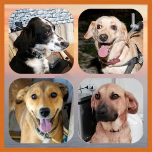 Homepage 01 Honden ter Adoptie 04b Special Needs