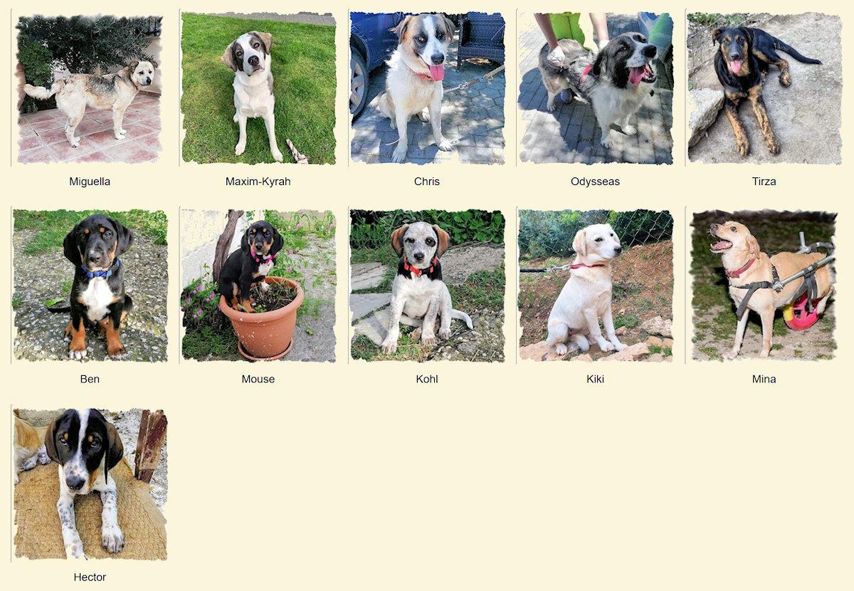Geadopteerde honden 2019 06 Dog Rescue Greece
