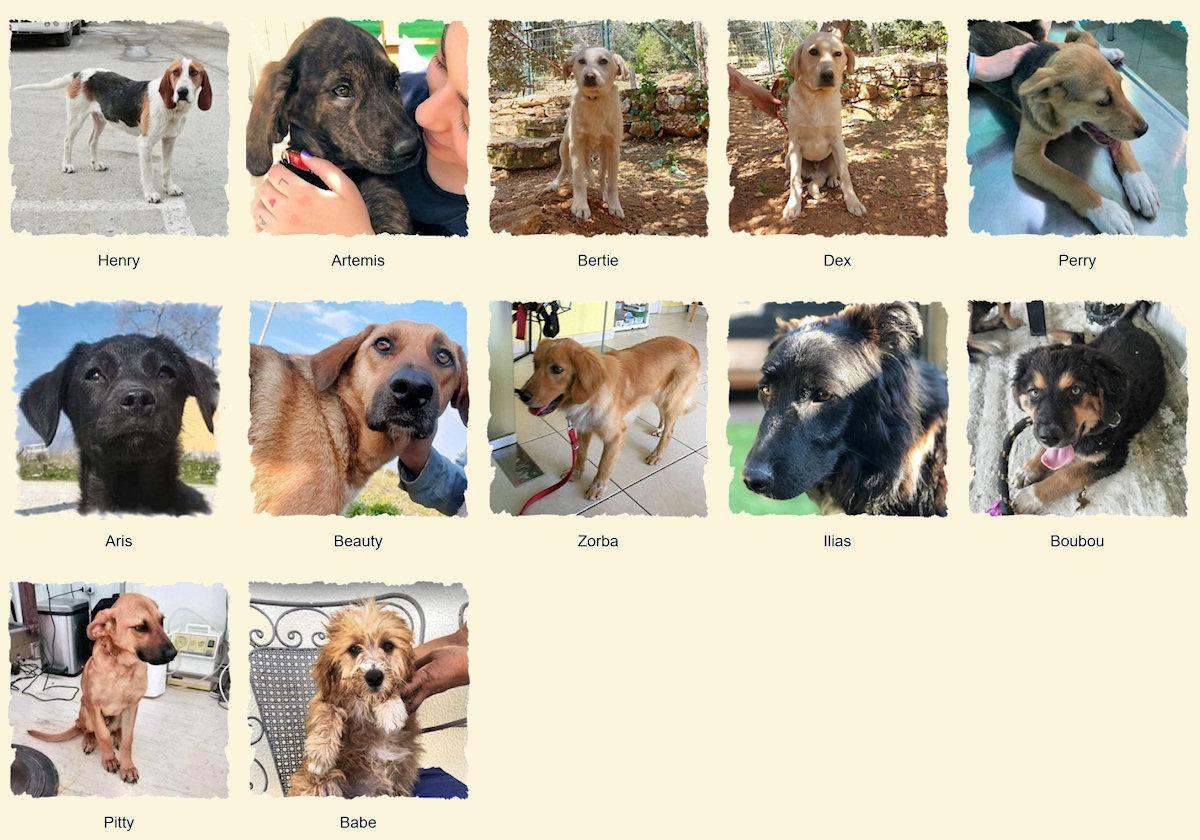 Geadopteerde honden 2019 07 Dog Rescue Greece