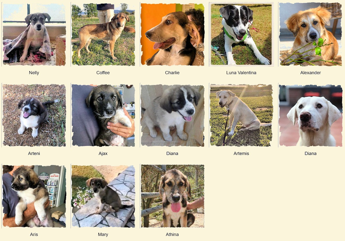 Geadopteerde honden 2019 08 Dog Rescue Greece
