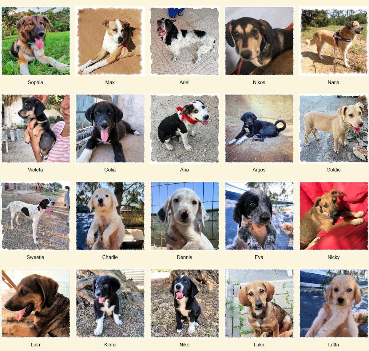 Geadopteerde honden 2019 09 Dog Rescue Greece