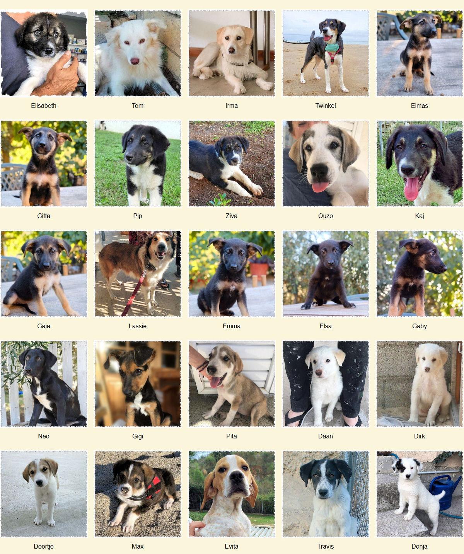 Geadopteerde honden 2019 11 Dog Rescue Greece