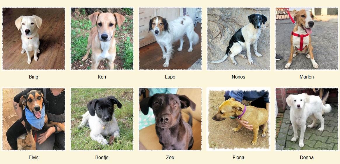 Geadopteerde honden 2020 01 Dog Rescue Greece