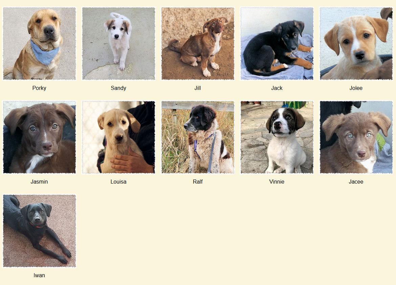 Geadopteerde honden 02 2020 Dog Rescue Greece