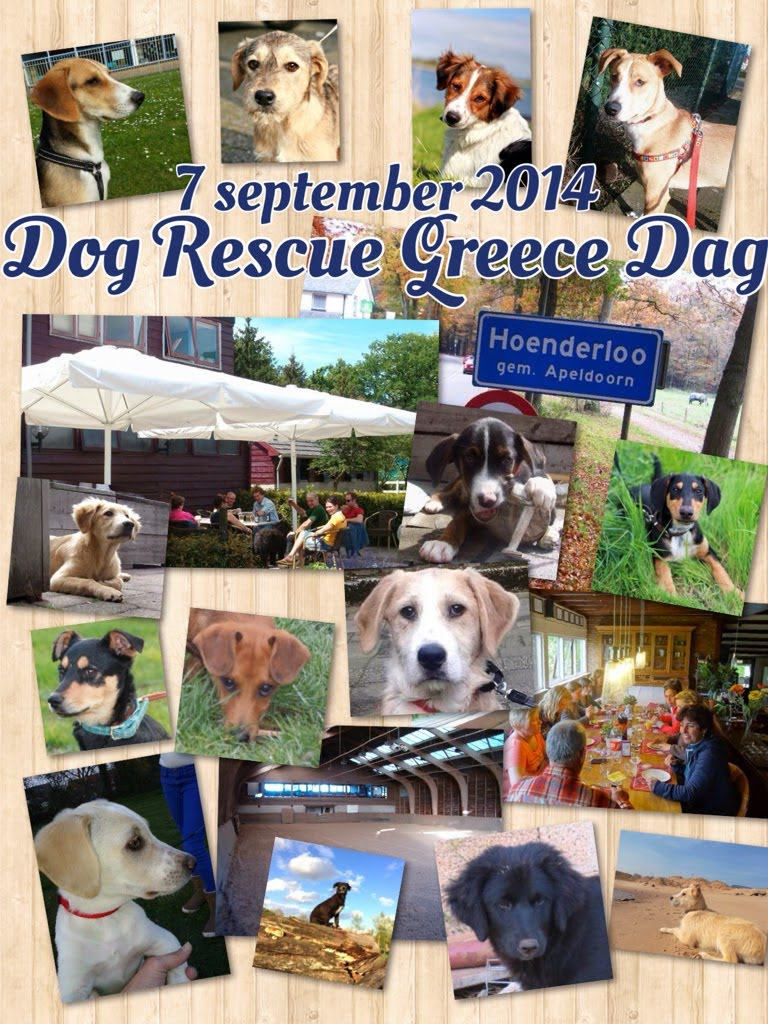 Dog Rescue Greece Dag 2014 Hoenderloo 7 september 01 Collage