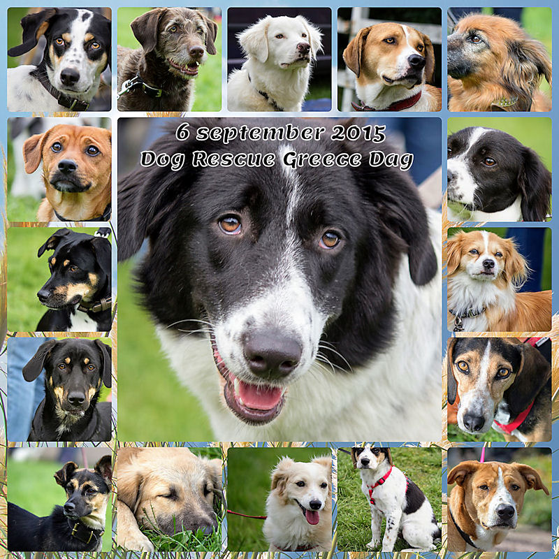 Dog Rescue Greece Dag 2015 Hoenderloo 6 september 01 Collage (2)