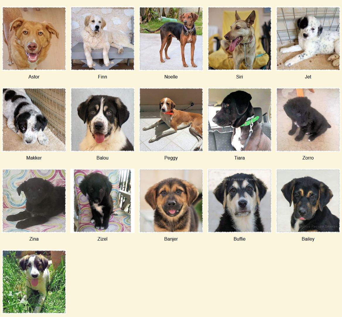 Geadopteerde honden 06 2020 Dog Rescue Greece
