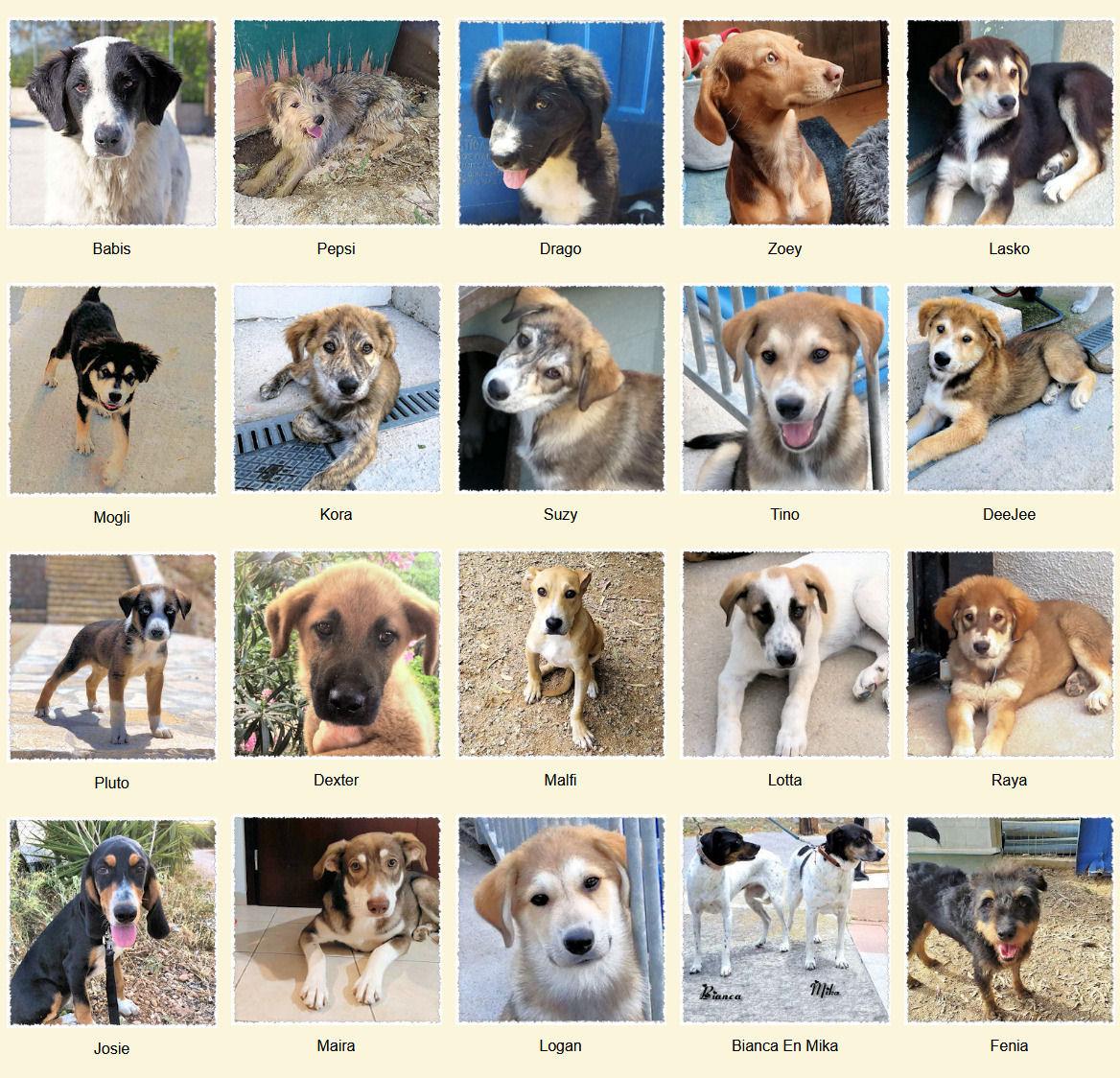 Geadopteerde honden 08 2020 Dog Rescue Greece
