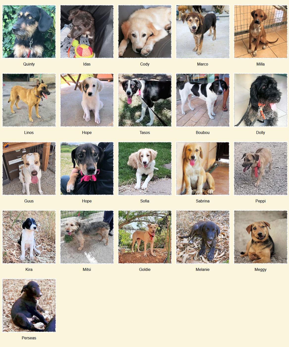 Geadopteerde honden 09 2020 Dog Rescue Greece