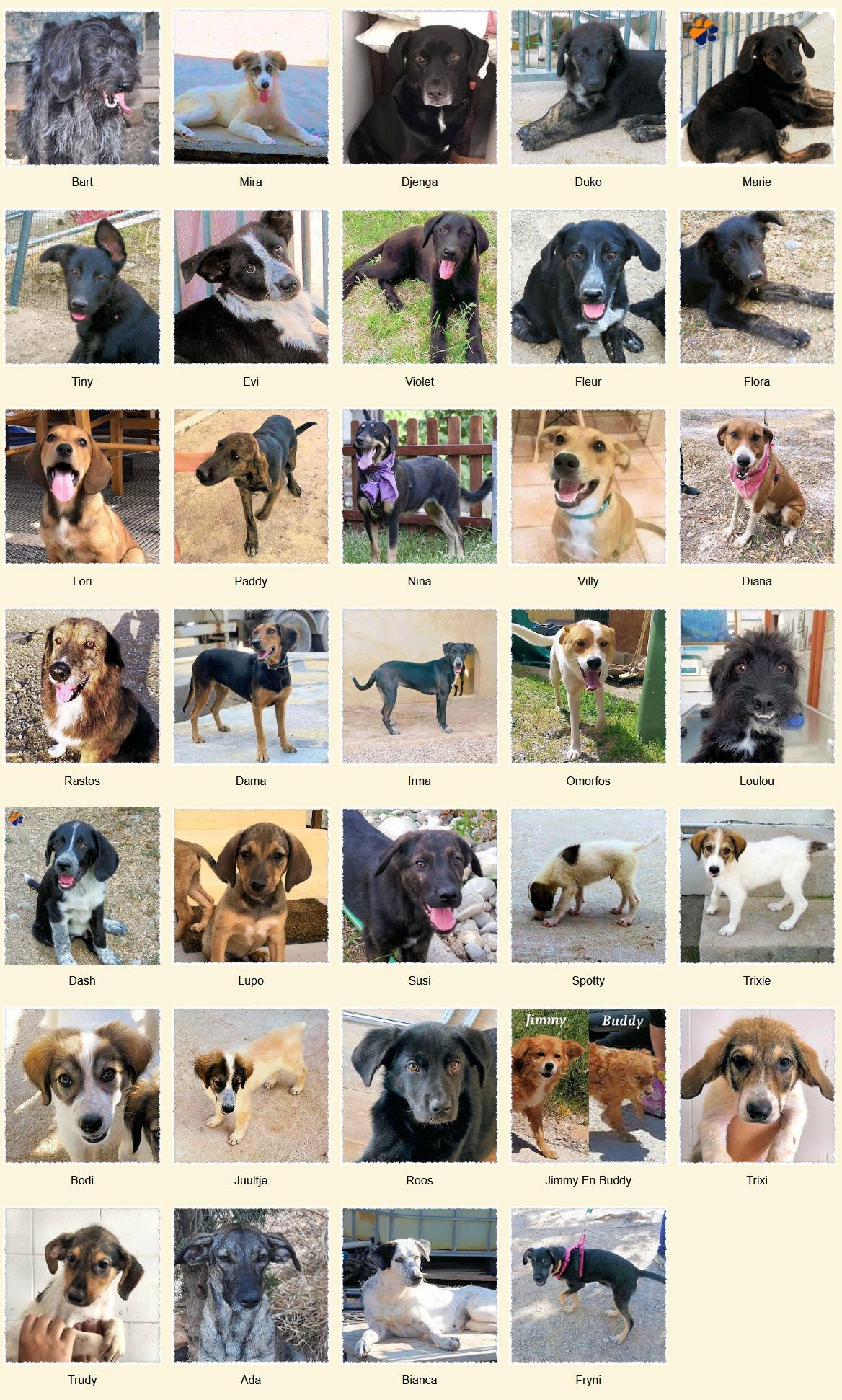 Geadopteerde honden 10 2020 Dog Rescue Greece
