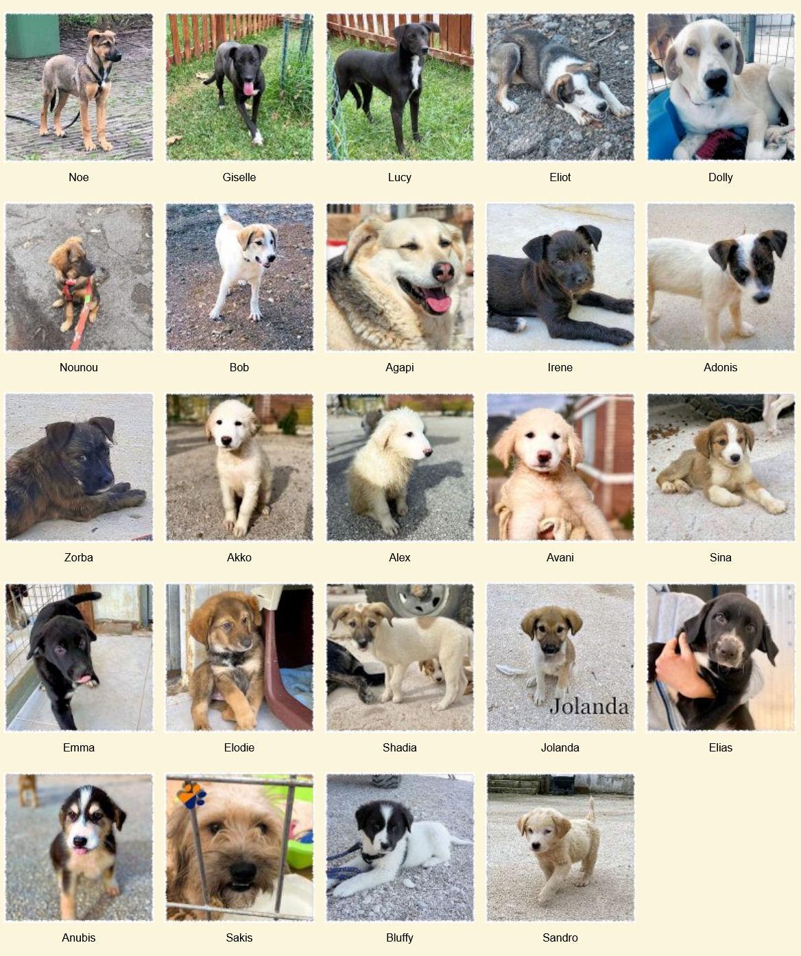 Geadopteerde honden 12 2020 Dog Rescue Greece