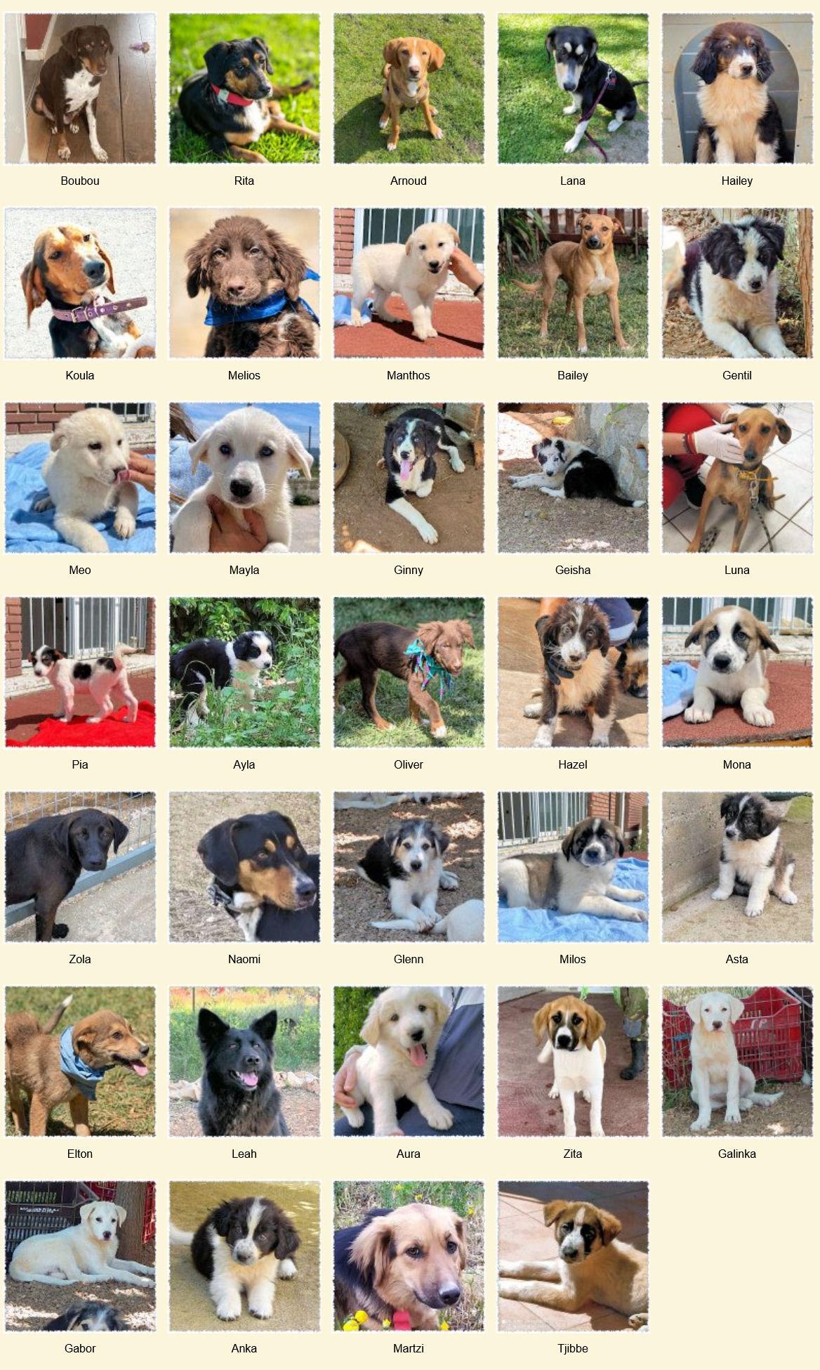 Geadopteerde honden 06 2021 Dog Rescue Greece